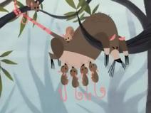 SJ Opossums
