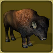 American Bison (Blue Fang)