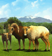 ZT Bighorn