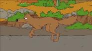Simpsons Coyote