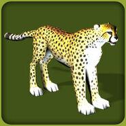 Cheetah (Blue Fang)