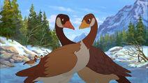 Goose, Canada (Brother Bear 2)