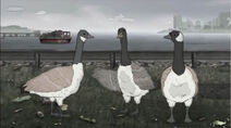 HBO Animals Geese