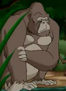 WNSB Gorilla