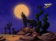 MSB Coyotes