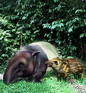 Malaysian Tapir plaque