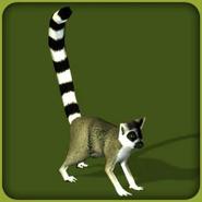 Ring-Tailed Lemur (Blue Fang)