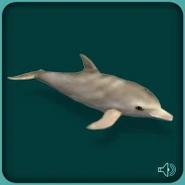 DolphinBottlenose BlueFang