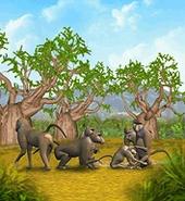 ZT-Olive Baboon