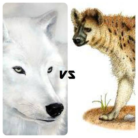 File:Kayla vs Skratch.png