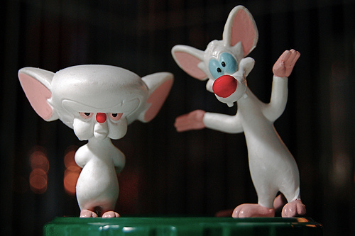 image pinky the brain jpg animaniacs wiki fandom powered by