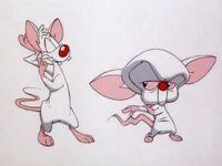 Pinky Brain dance