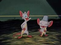 "Brain and his friend Pinky sing a song about ""Don Cerebro the Mouse"""