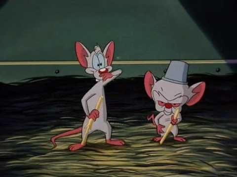 brain and his friend pinky sing a song about don cerebro the mouse
