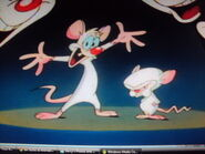 Pinky and the Brainy