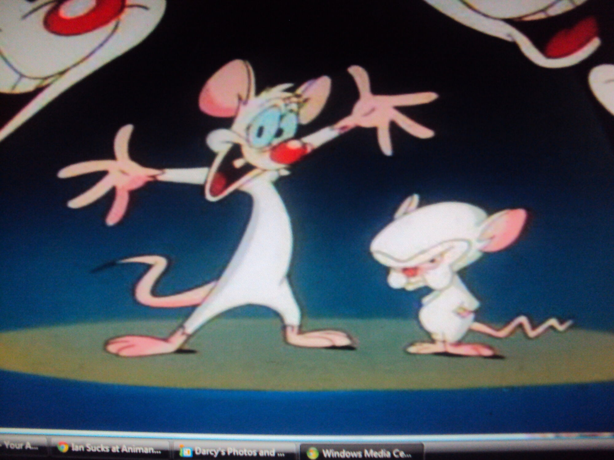 Pinky and the brain animaniacs wiki fandom powered by wikia pinky and the brainy thecheapjerseys Images