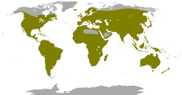 Répartition des Columbidae