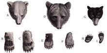 Dessin comparaison ours