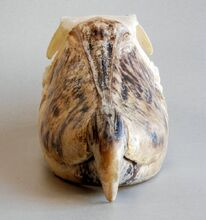 Crâne de bec-en-sabot du Nil1