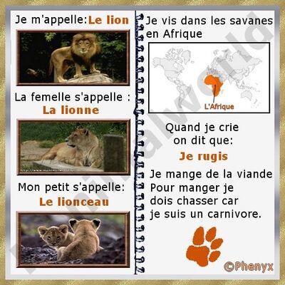 Petit lion