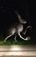 The Humanoid rabbit tab