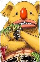 Minokoala Portrait