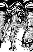 Jack Elephant (3)