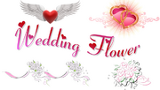 WD logo1