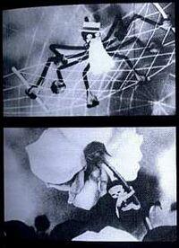 Die Spinne und die Tulpe