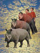 Animorphs warning book 16 jake rhino cover image