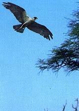 Osprey (16 - The Warning)