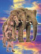 Rachel (African Elephant Morph)