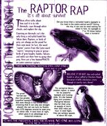 Animorphs Alliance flash issue 5 morph of the month raptors