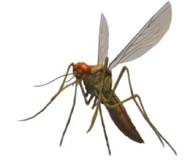 Mosquito book 18 cover morph