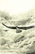 Tobias flying as a hawk The Encounter Japanese illustration
