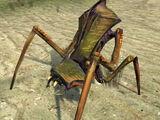 Antlion (Half-Life 2)