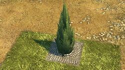 Cypress 2.jpg