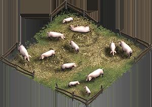 Pig farm field