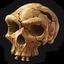 Icon museum neanderthaler 0