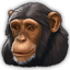 Chimpanzee 0