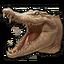 Icon albino crocodile 0