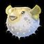 Balloonfish 0