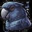 Black cockatoo 0