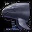 False killer whale 0