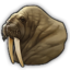 Walrus 0