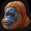 Orangutan 0