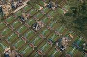 Sugar-beet-farms