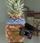 Pineapple Cameraman