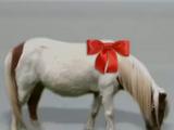 Wee Pony