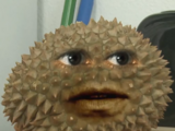 Spike the Durian